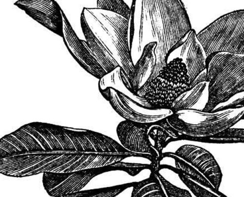 Barrisol Editions Engraving Flower